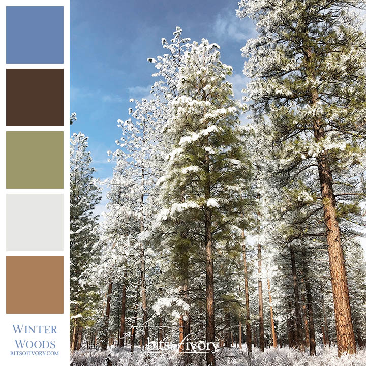 Snowy woods scene with color palette