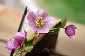 Book with Lenten Rose