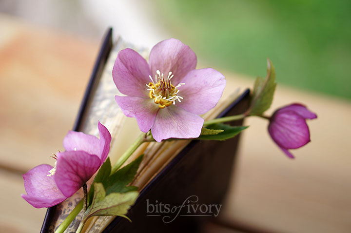 Book with Lenten rose.