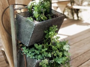 herbs planted in recycled office organizer