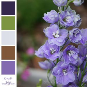 Delphiniums with color swatches
